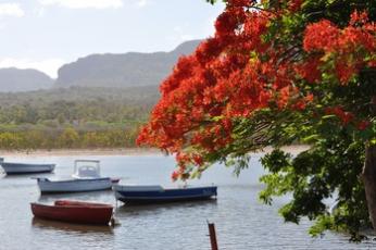 La loi Pinel prorogée jusqu'au 31 décembre 2021 à La Réunion
